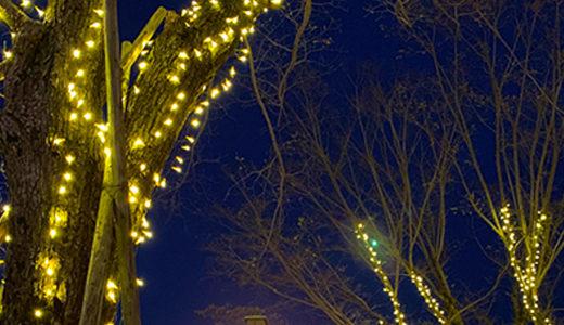 クリスマスにおすすめ!LEDイルミネーション ストリングライト(直線)について
